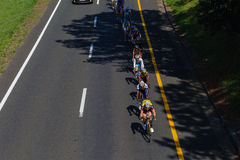 Cycling Peleton Race. Pro Rider Cyclists peleton line and low for speed chasing  the lone rider ahead  into the suburb of Westville Royalty Free Stock Photo