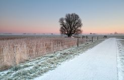 Cycling road in snow at sunrise Royalty Free Stock Image