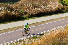 Cycling road. With wild grass Stock Image