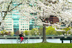 Cycling in Spring Stock Photo
