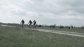 Cycling tourists ride on the road against the background of cows stock video footage