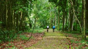 Cycling through tropical forest, clear ground pathway, surrounded by overgrowth plant. stock footage