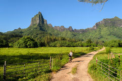 Cycling on tropical Moorea Royalty Free Stock Images