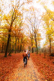 Veluwe autumn bicycle Stock Photo