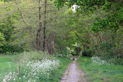 Cycling and walking path in spring landscape, forest with flowers. Walking, cycling path in a forest landscape with grass and spring flowers. Trees with young stock photos