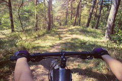 Cycling. In the woods, first person view Stock Images