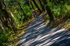 Cycling in the woods Royalty Free Stock Photos