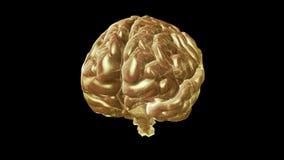 Cyclisch roterend computermodel van de menselijke hersenen Animatie met alpha- kanaal stock illustratie