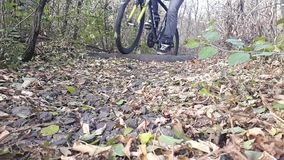 Cyclist In Autumn. Fall Forest.autumn stock footage