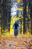 Cyclist autumn forest Royalty Free Stock Photos