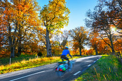 Cyclist in autumn Royalty Free Stock Photo