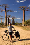 Cyclist and baobabs Stock Image