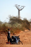 Cyclist and baobabs Royalty Free Stock Photos
