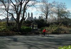 Cyclist in Central Park New York USA Stock Images
