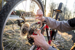 Cyclist checks the wheel of the bike after driving in the park. Stock Photos