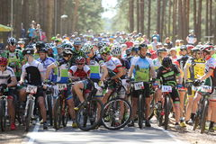 Cyclist competes in the elite MTB race at forest Royalty Free Stock Images