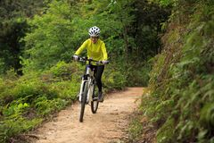 Cyclist cycling mountain bike on forest trail Stock Images