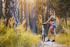 Cyclist cycling mountain bike on pine forest trail Stock Photography