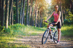 Cyclist cycling mountain bike on Pine forest trail Stock Images