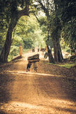 Cyclist on Dirt Road in the jungle. Cambodia Stock Images