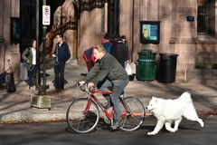 Cyclist with a Dog in Tow Royalty Free Stock Photography
