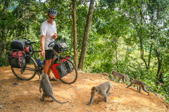 Cyclist feeding monkeys in Bali Stock Photo