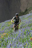 Cyclist in flowering meadow Royalty Free Stock Image