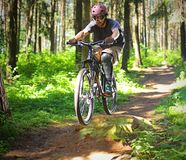 Cyclist in forest. Cyclist rides through the forest Royalty Free Stock Photos