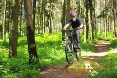 Cyclist in forest. Cyclist rides through the forest Royalty Free Stock Photo