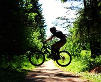 Cyclist in forest Royalty Free Stock Image