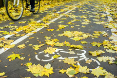 Cyclist in motion on road for bicycle in autumn Stock Photos