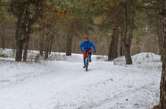Cyclist on the mountain bike, extreme winter riding in the fores. T. A man rides a bicycle Royalty Free Stock Image
