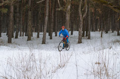 Cyclist on the mountain bike, extreme winter riding in the fores. T. A man rides a bicycle Stock Photos
