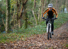 Cyclist on a mountain bike riding in the forest Royalty Free Stock Photo