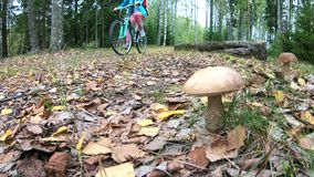 Cyclist and mushrooms in the autumn finnish forest stock video