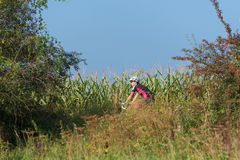 Cyclist in nature Royalty Free Stock Photos