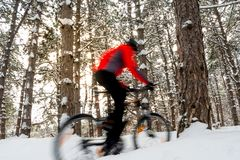 Cyclist in Red Riding Mountain Bike in Beautiful Winter Forest. Photo with Motion Blur. Cyclist in Red Riding the Mountain Bike in the Beautiful Winter Forest Royalty Free Stock Image