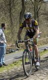 The Cyclist Reinardt Janse van Rensburg in The Forest of Arenbe stock photos