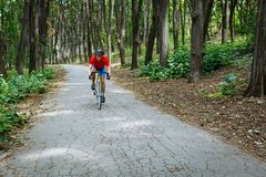 A cyclist rides on a road bicycle on road in woods. Royalty Free Stock Photo