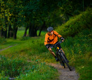 Cyclist Riding the Bike in the Beautiful Summer Forest Royalty Free Stock Photo