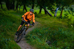 Cyclist Riding the Bike in the Beautiful Summer Forest stock photography