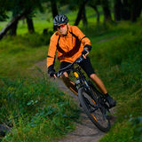 Cyclist Riding the Bike in the Beautiful Summer Forest Royalty Free Stock Image