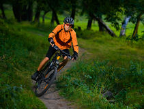 Cyclist Riding the Bike in the Beautiful Summer Forest Stock Images
