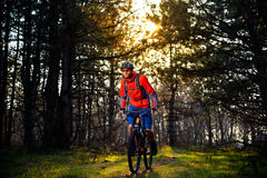 Cyclist Riding the Bike on the Trail in Beautiful Fairy Pine Forest. Adventure and Travel Concept. Royalty Free Stock Photos
