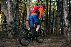 Cyclist Riding the Bike on the Trail in Beautiful Pine Forest. Healthy Lifestyle and Sport Concept. Royalty Free Stock Image