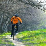Cyclist Riding the Bike on the Trail in the Forest Stock Images