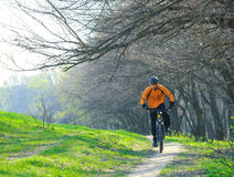 Cyclist Riding the Bike on the Trail in the Forest Royalty Free Stock Photos