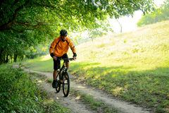 Cyclist Riding the Bike on the Trail in the Forest Stock Photo