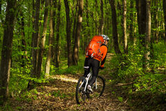 Cyclist Riding the Bike on a Trail in Summer Forest Royalty Free Stock Image