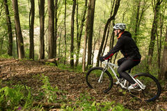 Cyclist Riding the Bike on a Trail in Summer Forest Royalty Free Stock Photography